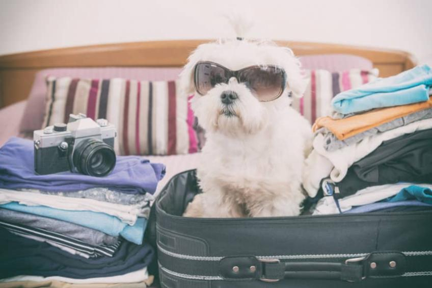 A dog sitting in a suitcase - unfortunately Sanctuary Students don't allow pets.